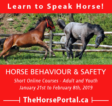 Learn to Speak Horse - Horse Behaviour & Safety - thehorseportal.ca