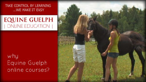 (button) ONLINE HORSE EDUCATION