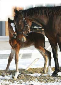 Mom and baby horses image