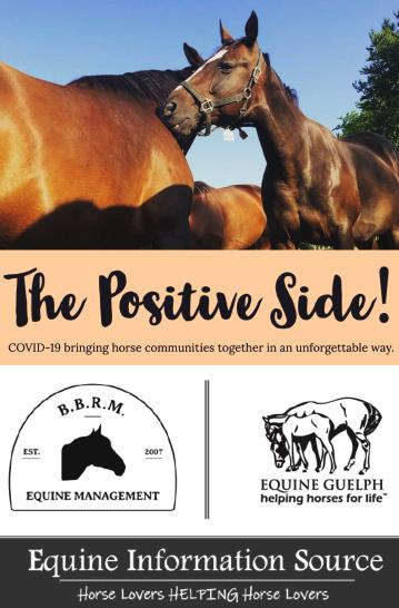 Equine Information Source poster image