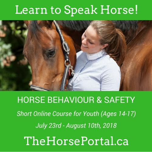 Equine Guelph's Horse Behaviour and Safety course