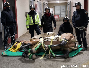 Hamilton Mounted Police practice their large animal rescue skills with Rusti the rescue mannequin and the Equine Guelph team