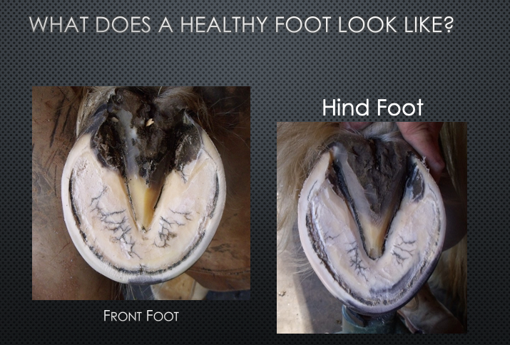 What does a healthy foot look like?