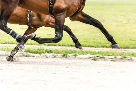 Racing photo horse legs