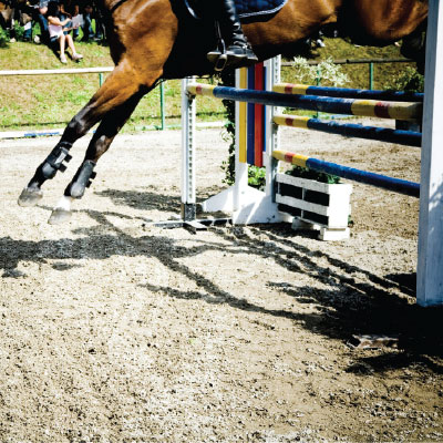 jumping horse landing