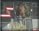(button) horse in trailer