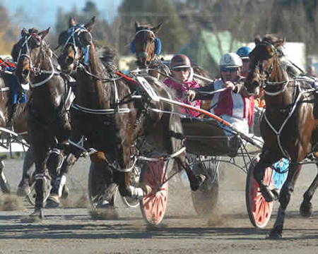 Racing Standardbreds