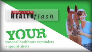 (button) HEALTHflash Seasonal Healthcare Reminders video channel