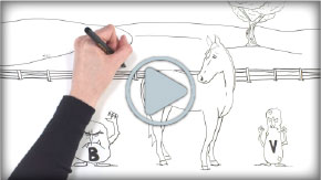 (button) image from INFECTION CONTROL IN TODAY'S RACING INDUSTRY whiteboard video