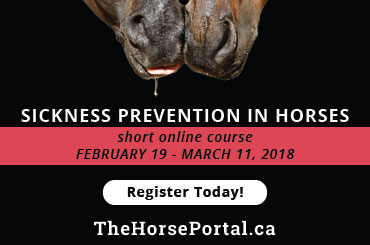 Sickness Prevention in Horses