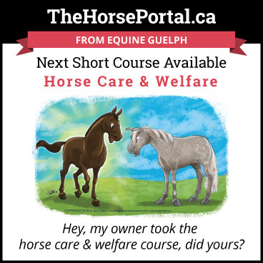 Horse Care & Welfare short online course button