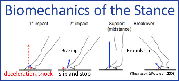 The Biomecanics of the Stance