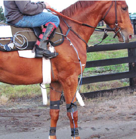 attached hoof sensors and accelerometers on horse
