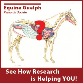 (button) See how Research is Helping YOU! - Equine Guelph Research Update