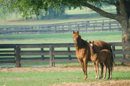 Mare & Foal in pasture
