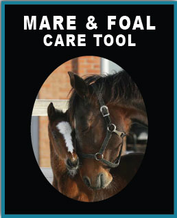 Mare & Foal Care Tool