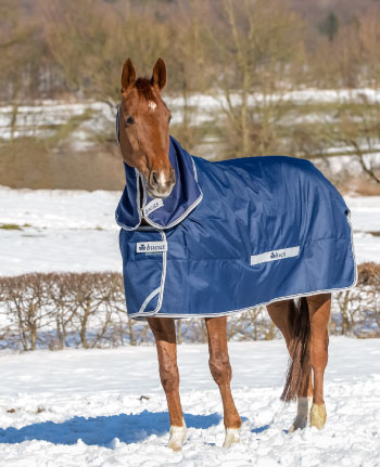blanketed horse in winter