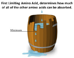 First Limiting Amino Acid clip-art
